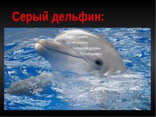 Серый дельфин: