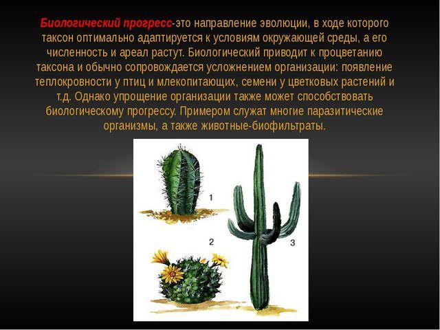 Биологический прогресс-это направление эволюции, в ходе которого таксон оптим...