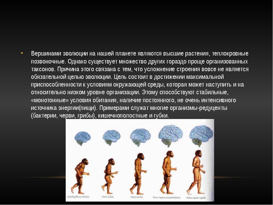 Вершинами эволюции на нашей планете являются высшие растения, теплокровные п...