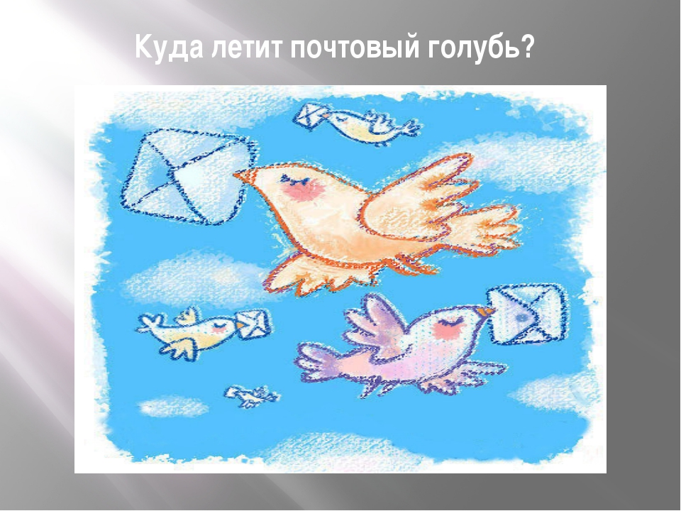 Куда летит почтовый голубь?