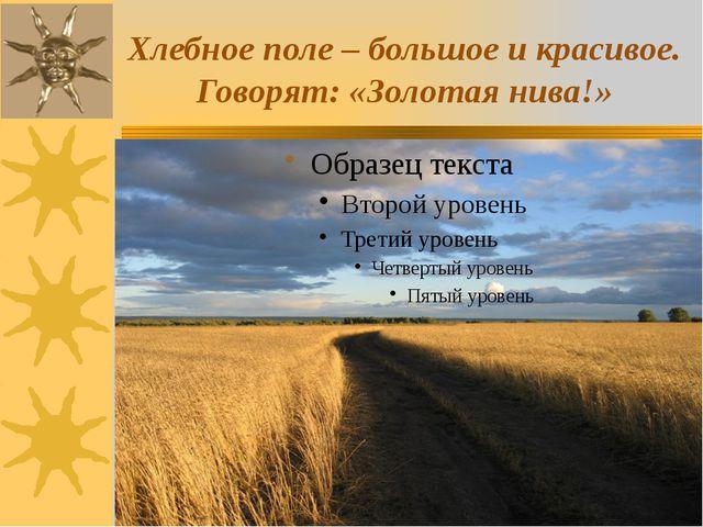 Хлебное поле – большое и красивое. Говорят: «Золотая нива!»
