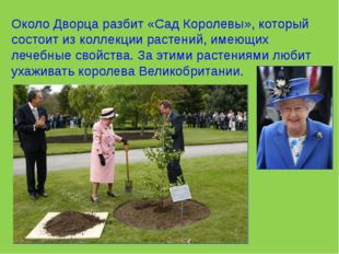Около Дворца разбит «Сад Королевы», который состоит из коллекции растений, им