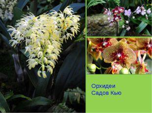 Орхидеи Садов Кью