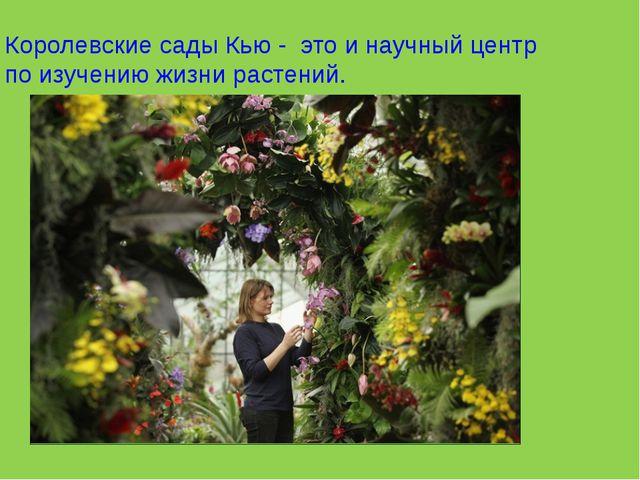Королевские сады Кью - это и научный центр по изучению жизни растений.