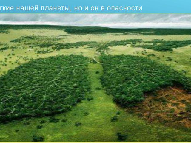 Лес – лёгкие нашей планеты, но и он в опасности