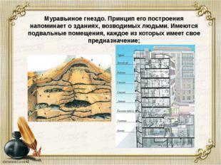 Муравьиное гнездо. Принцип его построения напоминает о зданиях, возводимых л