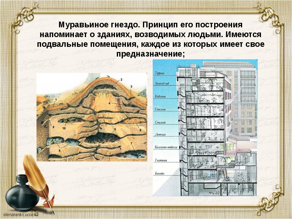 Муравьиное гнездо. Принцип его построения напоминает о зданиях, возводимых л...