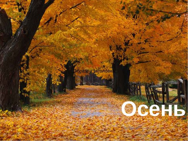 © InfoUrok.ru Осень Здесь текст не надо держать черным – его же не видно. Тут...