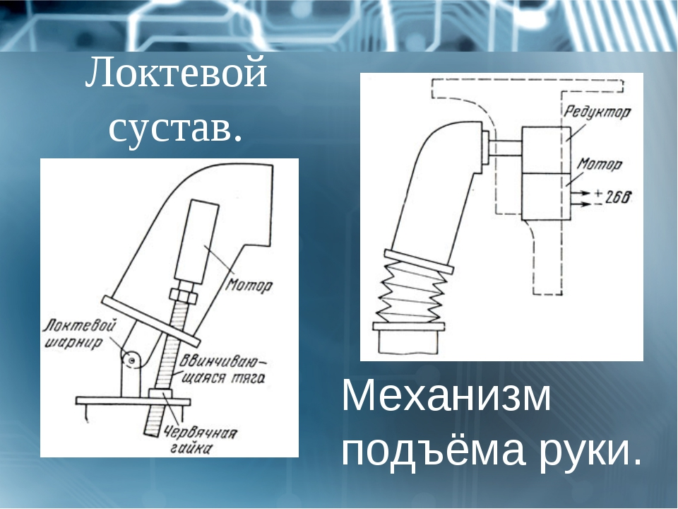 Механизм подъёма руки. Локтевой сустав.