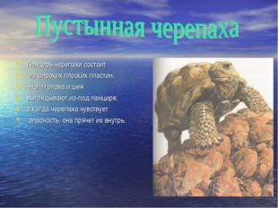 Панцирь черепахи состоит из широких плоских пластин. Ноги голова и шея выгляд