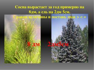 Сосна вырастает за год примерно на 8дм, а ель на 2дм 5см. Сравни величины и п