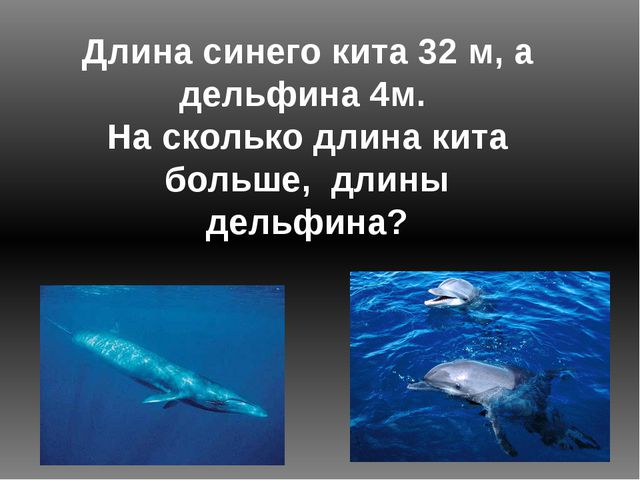 Длина синего кита 32 м, а дельфина 4м. На сколько длина кита больше, длины де...