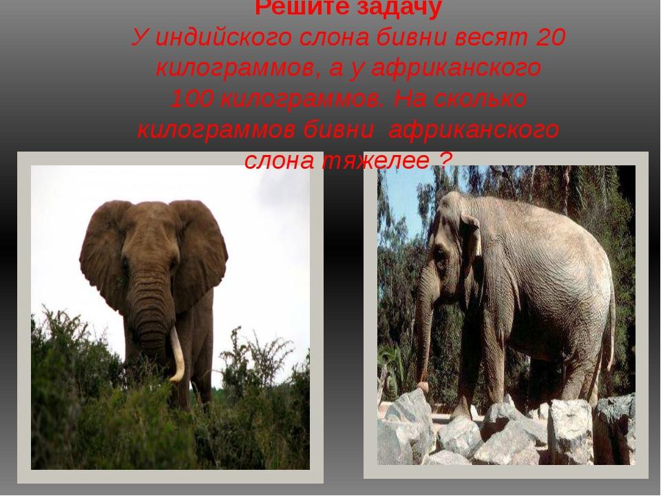 Решите задачу У индийского слона бивни весят 20 килограммов, а у африканского...