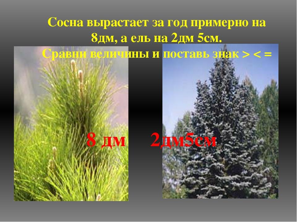 Сосна вырастает за год примерно на 8дм, а ель на 2дм 5см. Сравни величины и п...