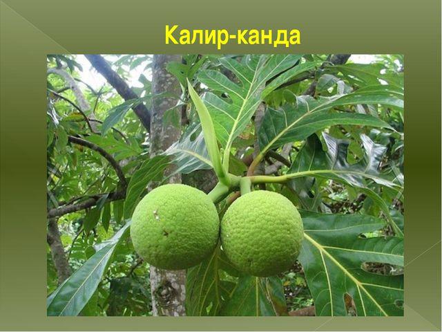 Калир-канда