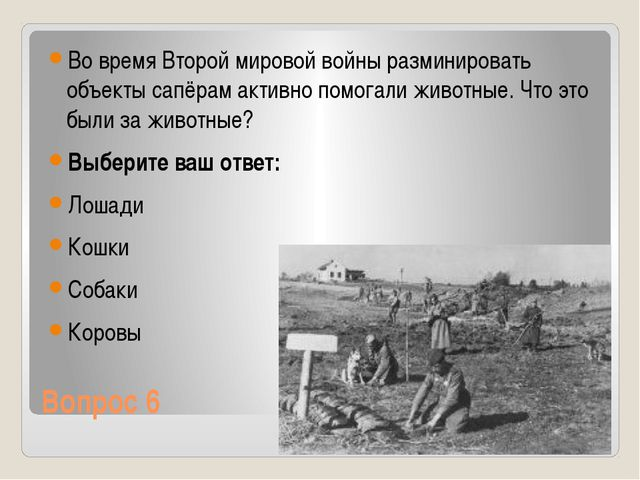 Вопрос 6 Во время Второй мировой войны разминировать объекты сапёрам активно...
