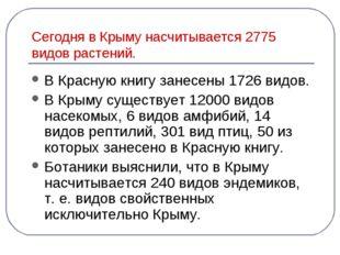 Сегодня в Крыму насчитывается 2775 видов растений. В Красную книгу занесены 1