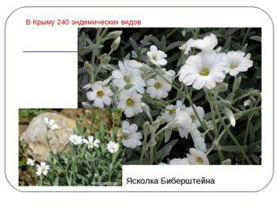 В Крыму 240 эндемических видов Ясколка Биберштейна