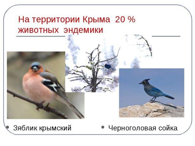 На территории Крыма 20 % животных эндемики Зяблик крымский Черноголовая сойка