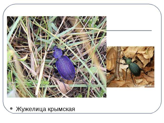 Жужелица крымская