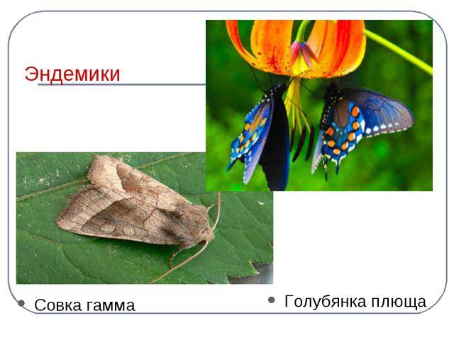 Эндемики Совка гамма Голубянка плюща