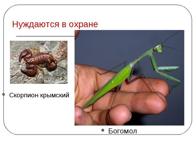 Нуждаются в охране Скорпион крымский Богомол