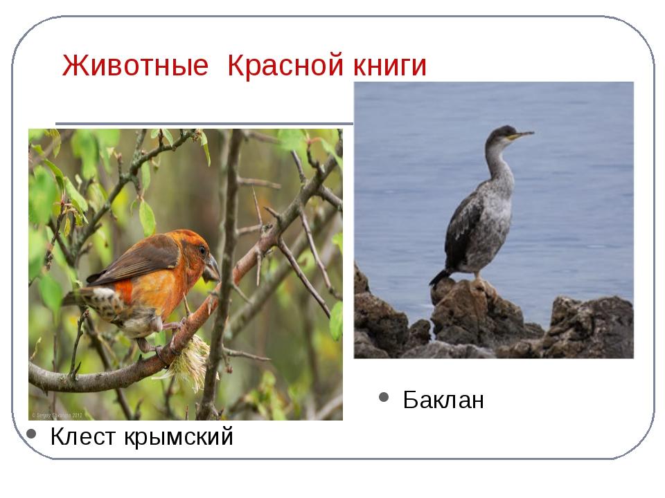 Животные Красной книги Клест крымский Баклан