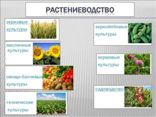 зерновые культуры зернобобовые культуры кормовые культуры масличные культуры