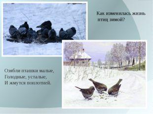 Как изменилась жизнь птиц зимой? Озяблипташкималые, Голодные,усталые, И жм