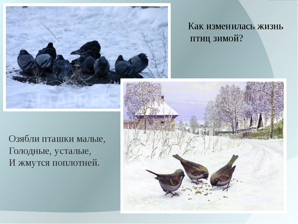 Как изменилась жизнь птиц зимой? Озяблипташкималые, Голодные,усталые, И жм...