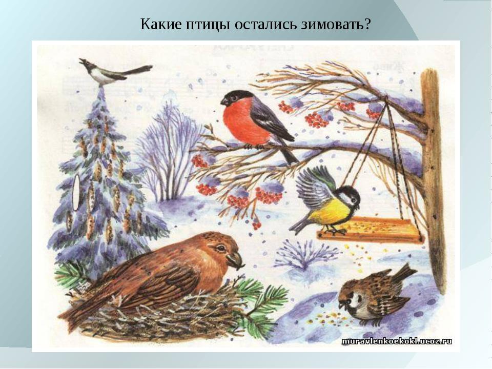 Какие птицы остались зимовать?
