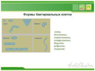 Формы бактериальных клеток кокки, диплококки, стрептококки, стафилококки, бац