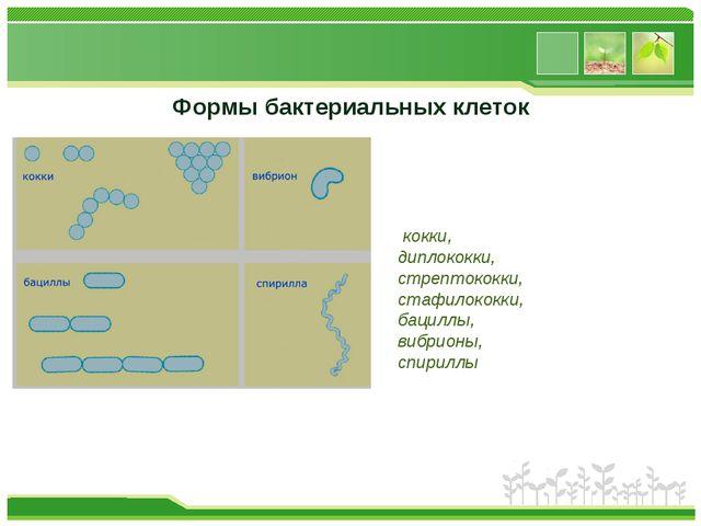 Формы бактериальных клеток кокки, диплококки, стрептококки, стафилококки, бац...