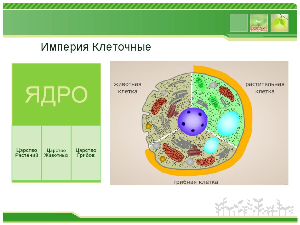 Империя Клеточные www.themegallery.com