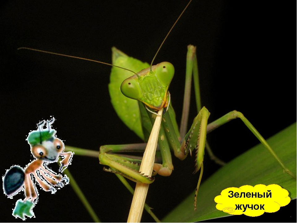 Зеленый жучок