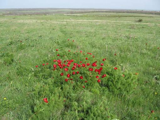 http://geobotany.narod.ru/europe/212.jpg