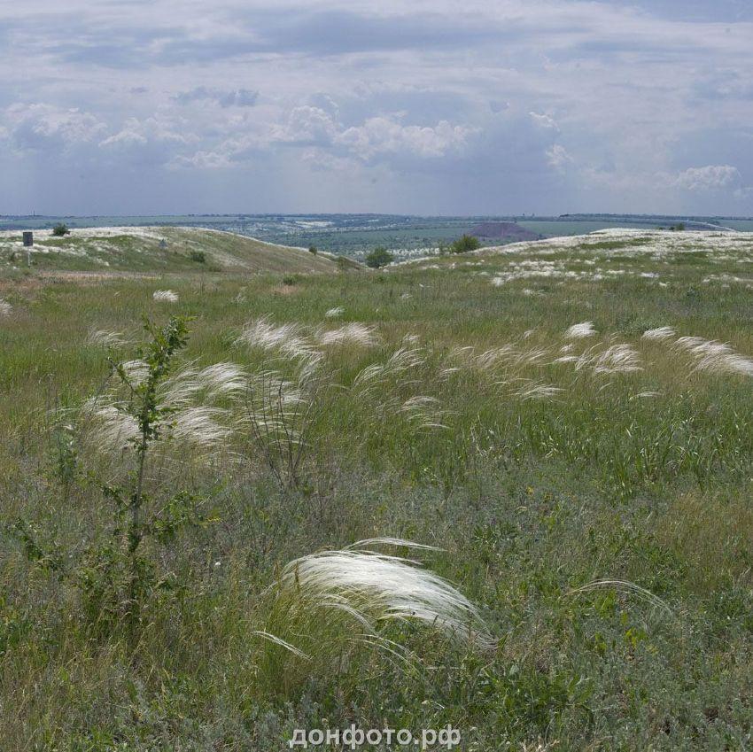ковыльная степь Донского края