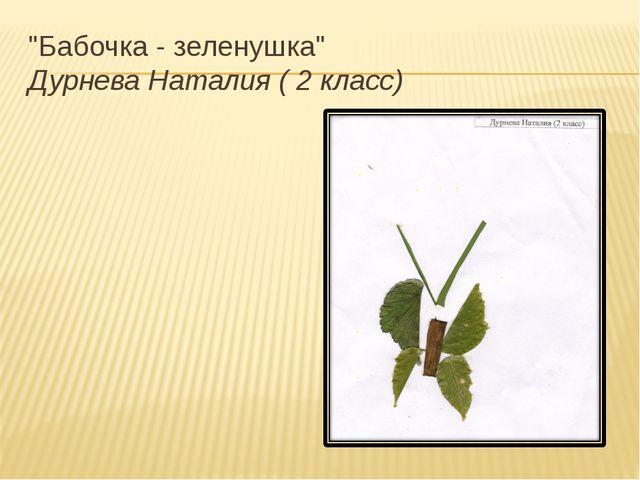 """Бабочка - зеленушка"" Дурнева Наталия ( 2 класс)"
