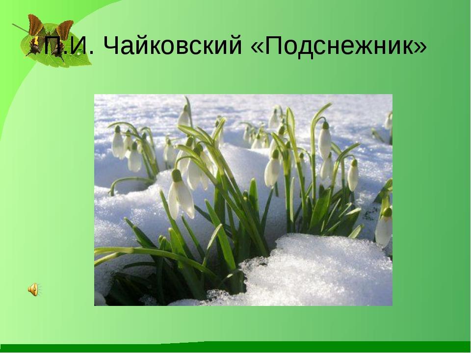 П.И. Чайковский «Подснежник»