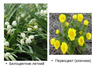 Белоцветник летний Первоцвет (ключики)