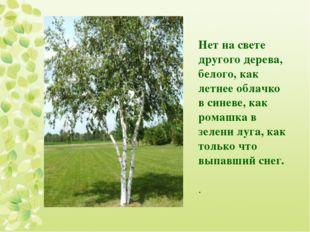 Нет на свете другого дерева, белого, как летнее облачко в синеве, как ромашка