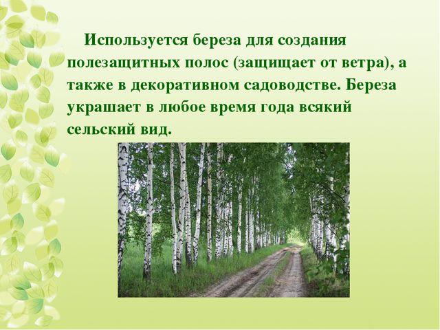 Используется береза для создания полезащитных полос (защищает от ветра), а та...