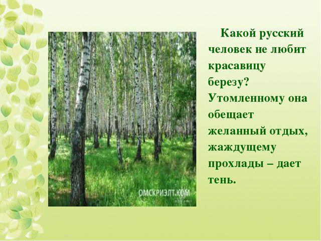 Какой русский человек не любит красавицу березу? Утомленному она обещает жела...