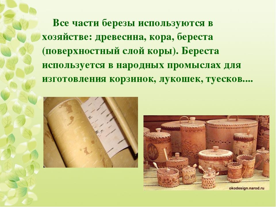 Все части березы используются в хозяйстве: древесина, кора, береста (поверхно...