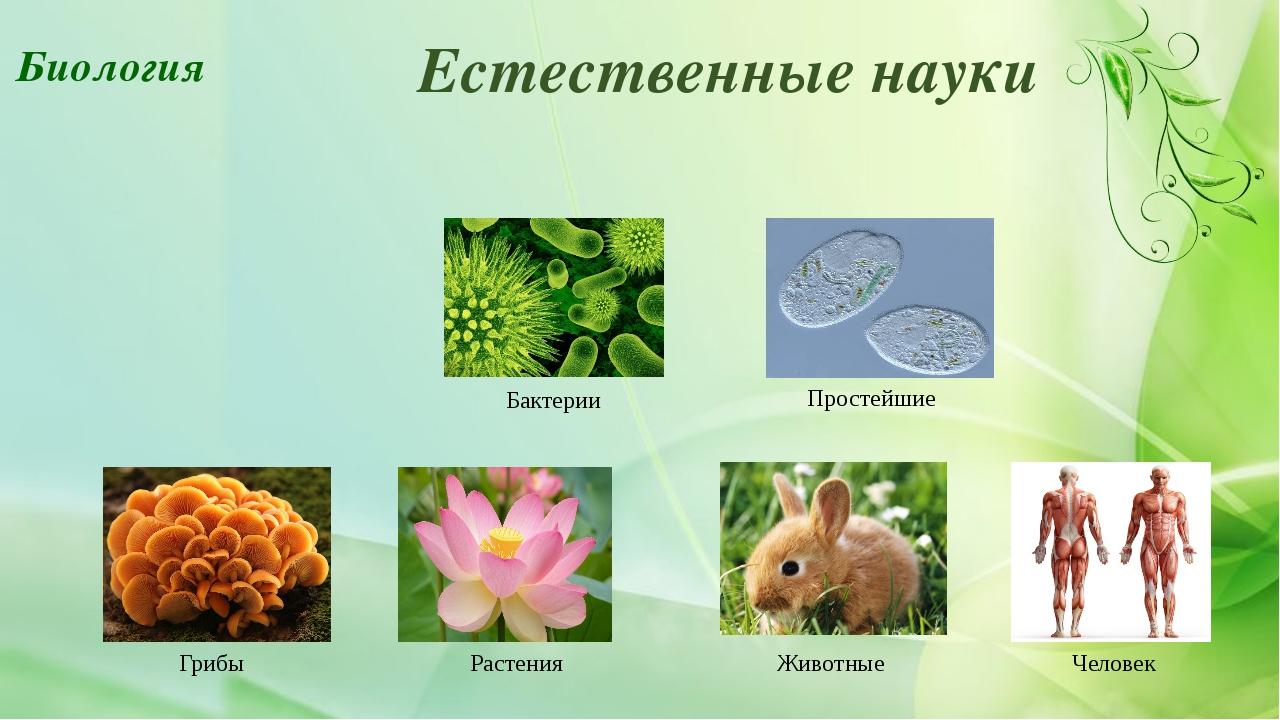 Естественные науки Бактерии Простейшие Грибы Растения Животные Человек