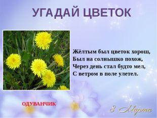 Жёлтым был цветок хорош, Был на солнышко похож, Через день стал будто мел, С