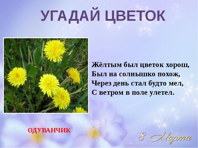 Жёлтым был цветок хорош, Был на солнышко похож, Через день стал будто мел, С...