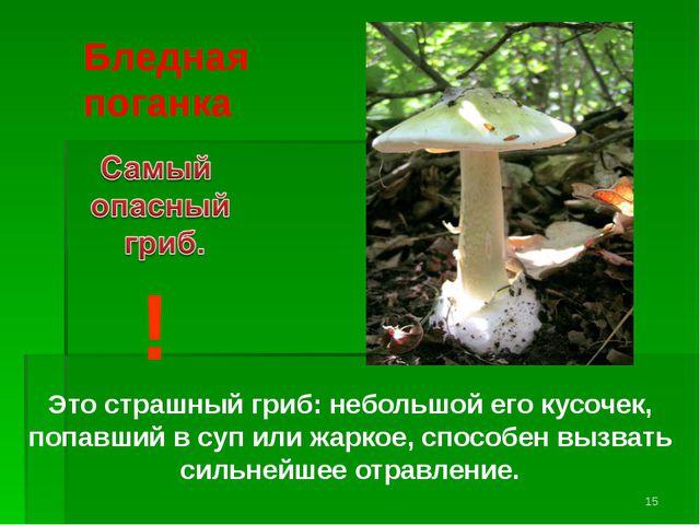 Бледная поганка ! Это страшный гриб: небольшой его кусочек, попавший в суп ил...