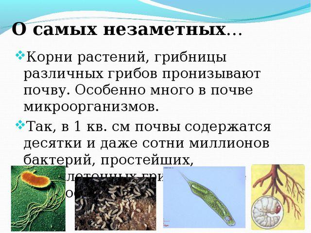 О самых незаметных… Корни растений, грибницы различных грибов пронизывают поч...