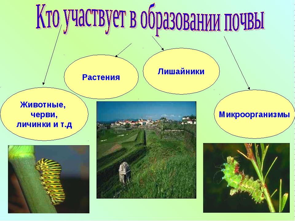 Растения Животные, черви, личинки и т.д Лишайники Микроорганизмы